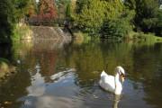 Bridge & Weir adj Lower Woman's Way Pond  at Sheffield Park
