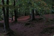 Edge of Stoke Woods near Stoke Post
