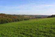 Grassland, Chinnor