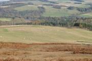 Field, Howdenpot