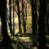 Woodland at Rogerley
