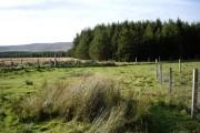 Woodland near The Cabrach