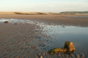 Borth sands and petrified tree