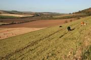 Farmland at Harelaw