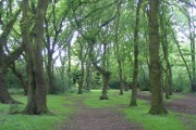 Hearsall Common, late spring