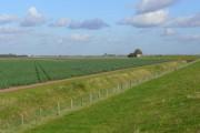 Lincolnshire brassica land