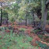 Lord Anson's Wood