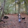 Castlehead Wood, Keswick