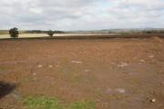 Potato field, Ridgeway Road