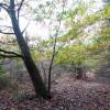 North Walsham Heath