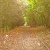 Path at Goose Green
