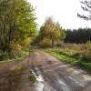 Track Junction near Holborn Hill Plantation
