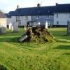 Stump of old yew tree