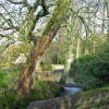 River Glym, Cleveley, Oxfordshire