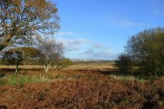 Gower moorland