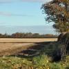 Wheatfield north of Leconfield
