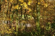 Oak wood, Blaxton Creek