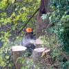 Tree felling in Nailsworth
