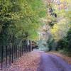 Autumnal road near Knodishall church.