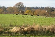 Mixed grazing at Lauriston