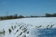 Farmland near Haighton