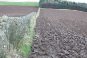 Kilduff Farmland