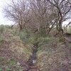 Overgrown Byway to nowhere