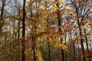 Autumn leaves, Hembury Woods
