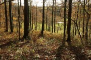 Hembury Woods