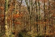 Path in Hembury Woods