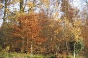 Woods near Howden