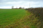 Haylage field north of Broadwoodwidger