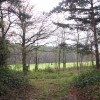 A track in North Walsham Wood