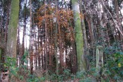 View into North Walsham Wood