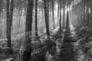 Woods near Stumblewood Common