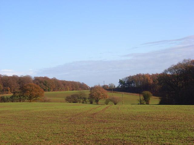 Farmland, Binfield Heath