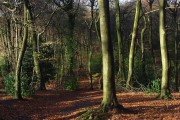 Lambridge Wood