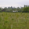 Field of newly planted trees alongside Bouts Lane.
