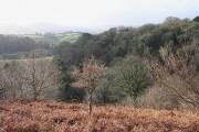 Drewsteignton: near Hunter's Tor