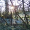 Woodlands sunset