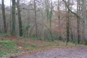Stoke Woods at the top car park