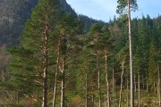 Forestry, Thirlmere