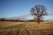 Liquorice Lane farmland