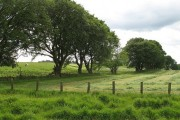 Field boundaries, Hill Farm