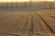 Farmland, Crowmarsh
