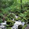 Inlet stream