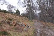 Firewood, Craigbui Wood