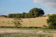 View from field towards Highstead