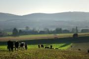 Farmland, Tipsall