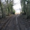 Bridleway exiting Pitt Wood to Cooting Down